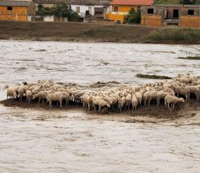 alluvione_sardegna_pecore